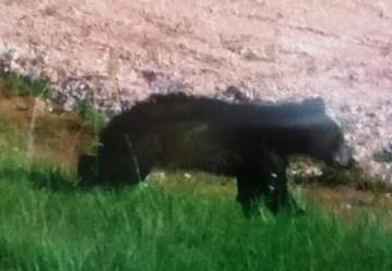 bear_cropped358x248